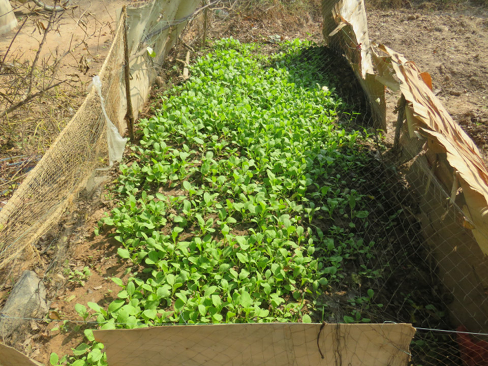 green_crop